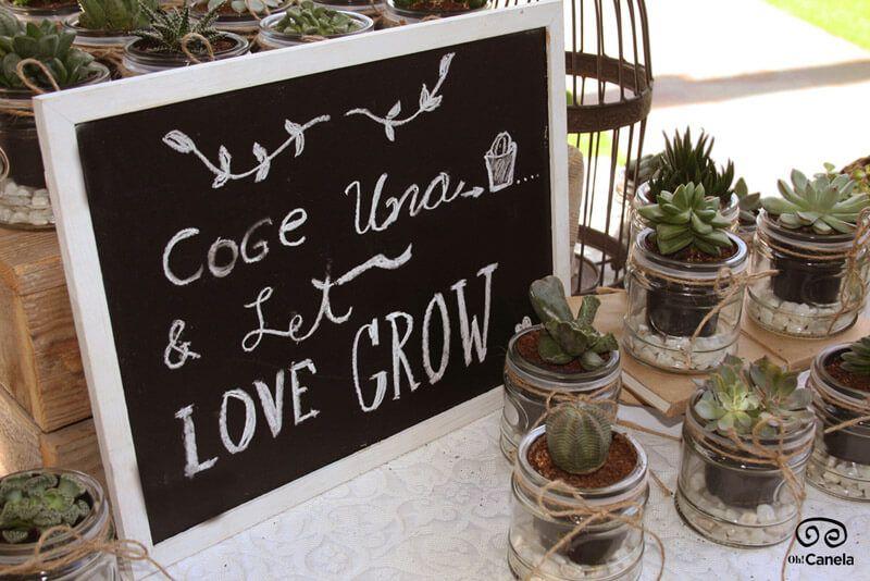 Tarritos de plantas - Regalos para invitados