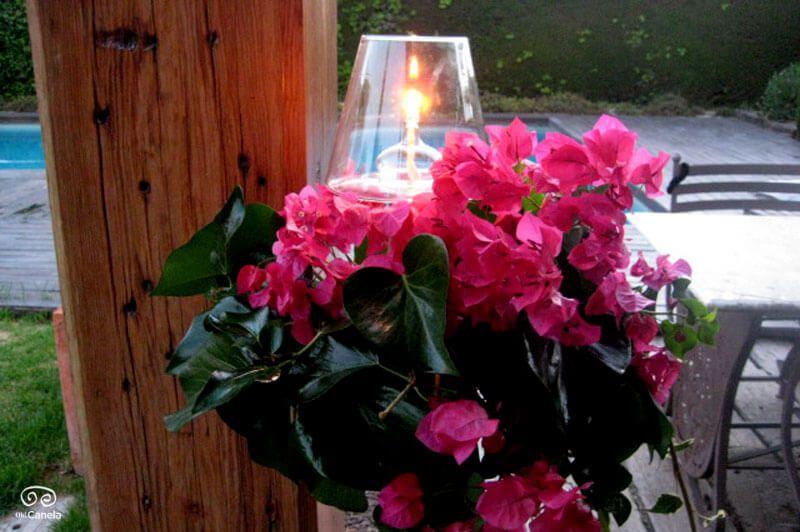 Buganvilla rodeando vela - iluminacion